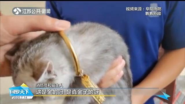 保猫还是手镯?安徽:猫头被3万元金手镯卡住,主人无奈求助消防