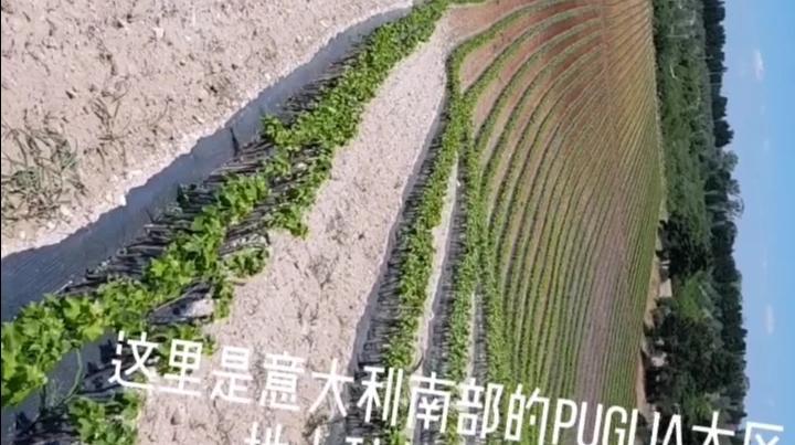 探访酿酒葡萄根苗的生产基地