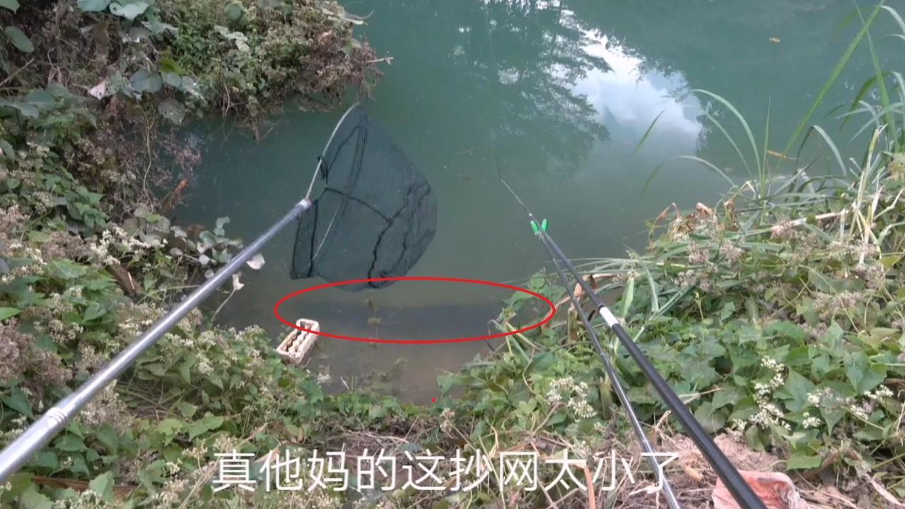 10多斤的鱼欺负钓鱼人,不能忍下水盘它