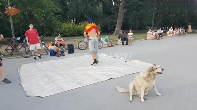 街上有人跳街舞,狗狗看不下去,上去露两手,路人都看呆了!