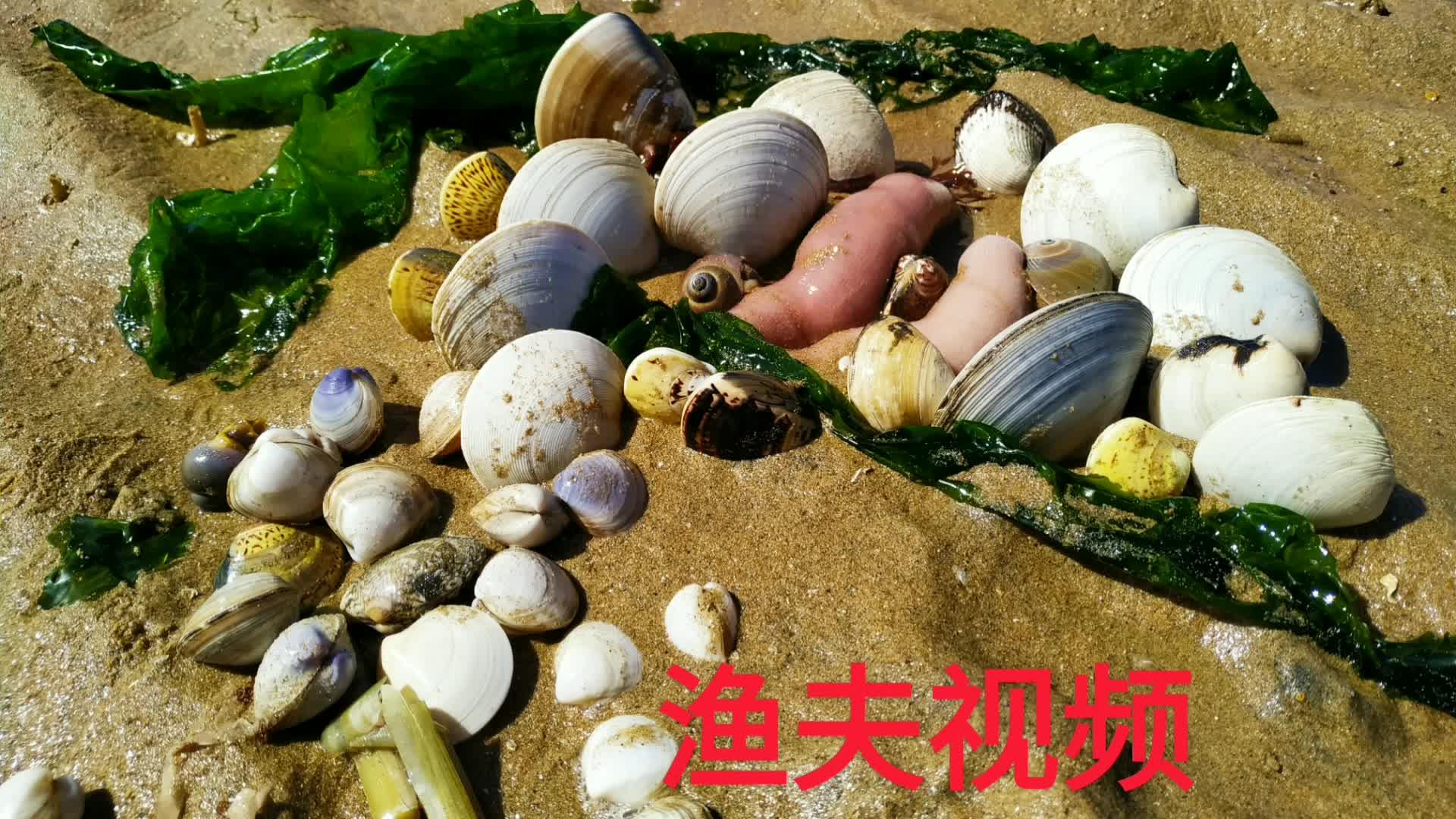 沙滩上这么多小眼,看渔夫如何识破:月亮贝、蟹子、猫眼螺