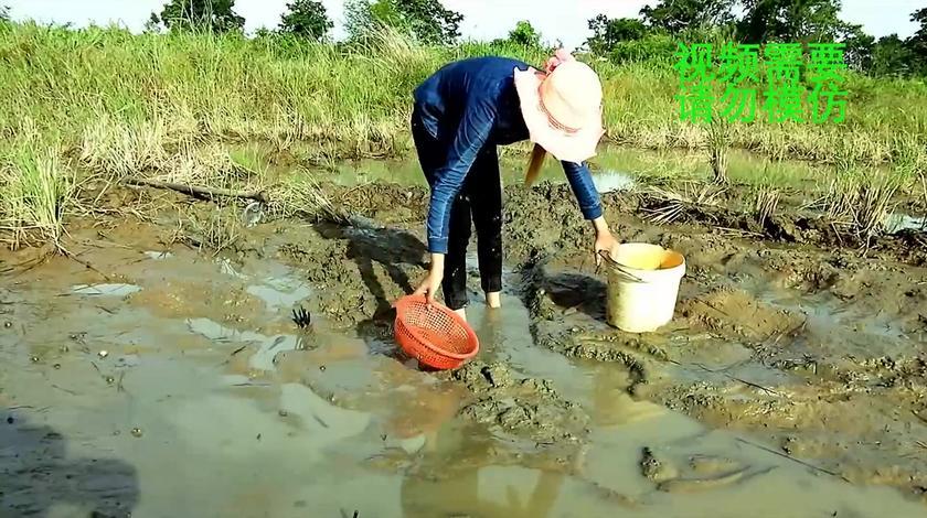 户外捕鱼:农村姑娘嘴馋了,把小溪的水抽干,然后开始快乐的捡鱼